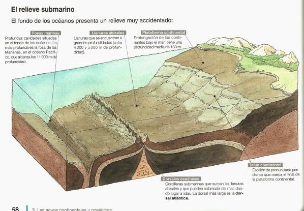 Formas del relieve oceánico
